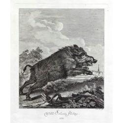 Wild Schwein Flüchtig