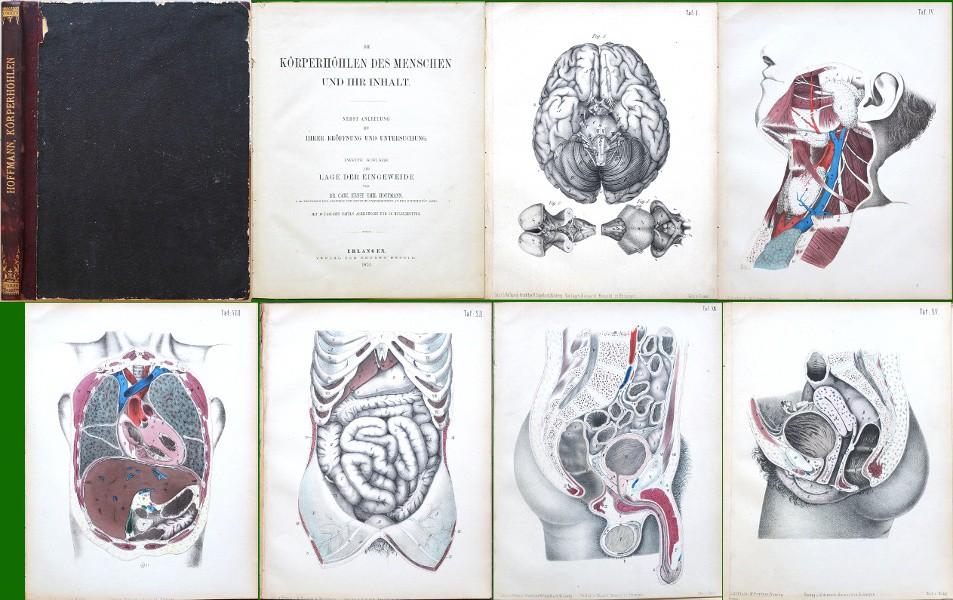 Die Körperhöhlen des Menschen und ihr Inhalt