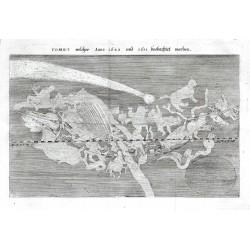 Comet welcher Anno 1680 und 1681 beobachtet worden